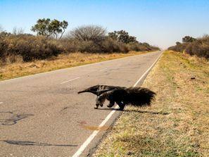 Prenájom auta Resistencia, Argentína