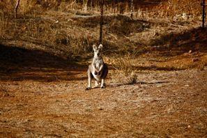 Prenájom auta Tamworth, Austrália